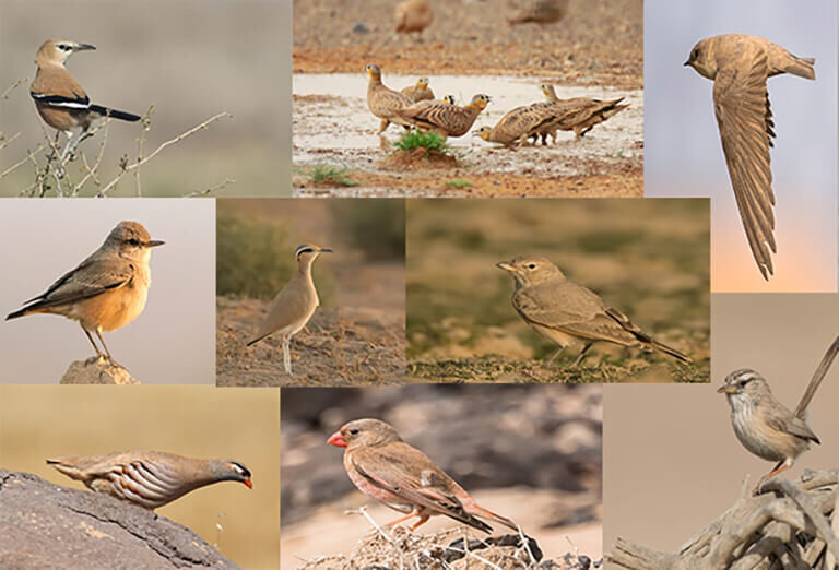 day 11 & 12 of 13 Days Iran Birdwatching Tour