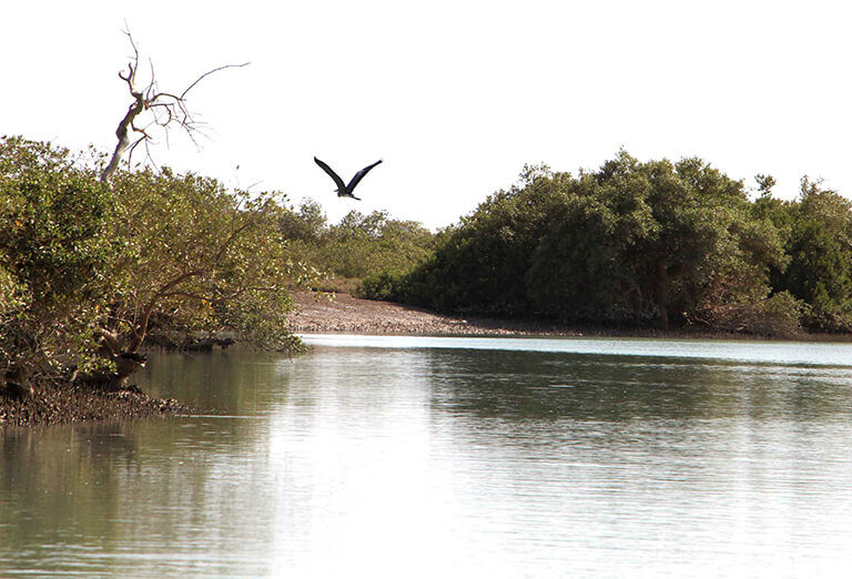 bahoukalat river with mangrove forest