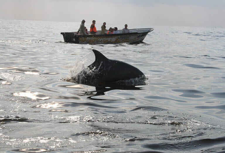 Dolphins in Hengam Island