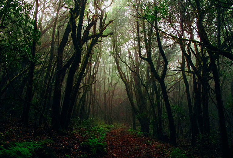 Screaming Forest, Mashhad - one of mysterious places in Iran