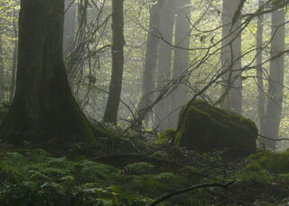 Hyrcanian Forests, One of the World's Oldest Forests